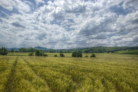 panoramatic: Wide Wheat Field with Small Village in Distance
