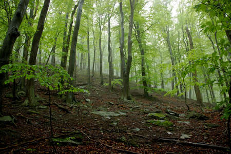 misty forest: Misty Forest with Rocks Covered by Moss and Stump-Wood Stock Photo