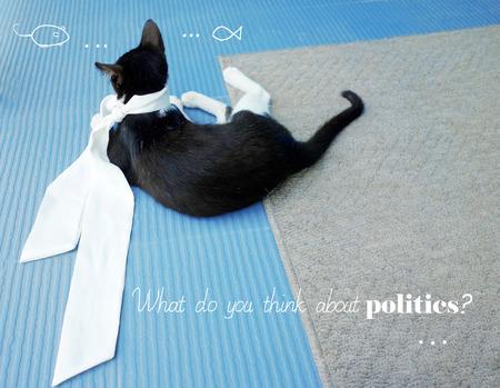 sagacious: A kitten is thinking about politics                                Stock Photo