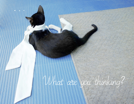 sagacious: A kitten is thinking about