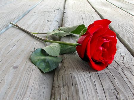 rose on wood floor Stock Photo - 335147