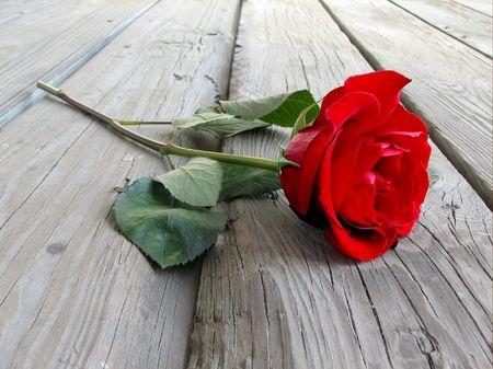 rose on wood floor