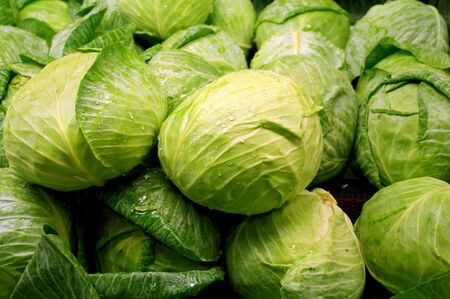 green cabbage in the middle of many cabbages photo