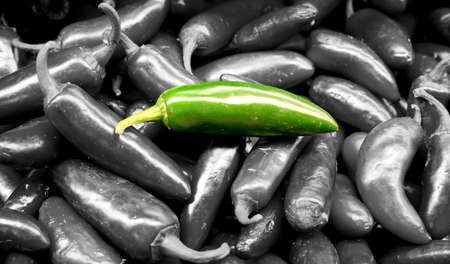 isolated jalapeno green pepper in the middle of many jalapeno green peppers photo