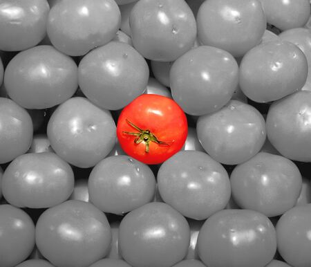 isolated tomato in the midde of many tomatoes