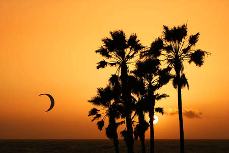 a mans parachutte flying over sunset at venice beach. palm trees silhouette againts orange sky and setting sun