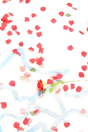 background of rose petal, rose and wedding veil on white