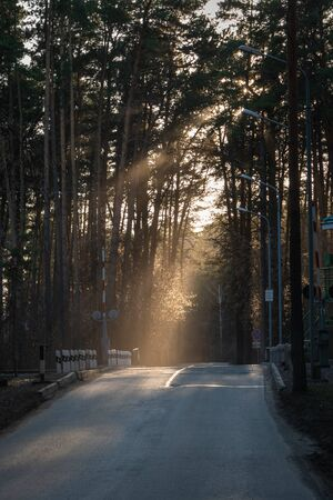 Rays of light illuminate a railway crossing in the forest. Beautiful light on the landscape, handheld shooting