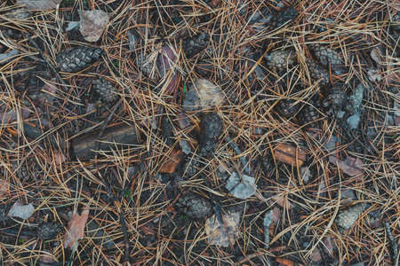 Land in the autumn forest close up Banco de Imagens