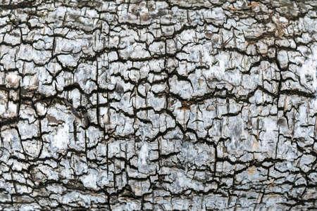 Birch bark texture close up Banco de Imagens