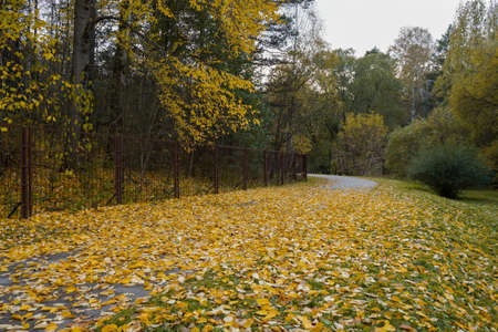 Autumn foliage in the park Banco de Imagens