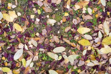 Autumn fallen leaves top view.