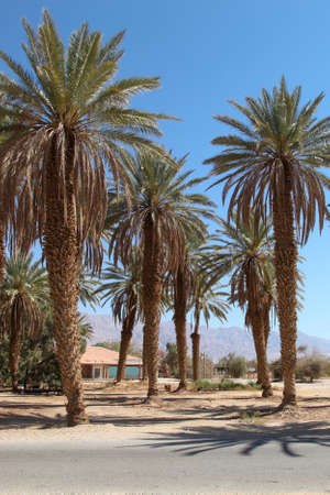 Palm trees against the background of mountains and blue sky. Banco de Imagens