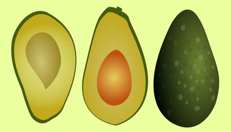 fresh avocado vector, which is whole and sliced  イラスト・ベクター素材