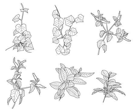 basic vector image of plants ready to be colored