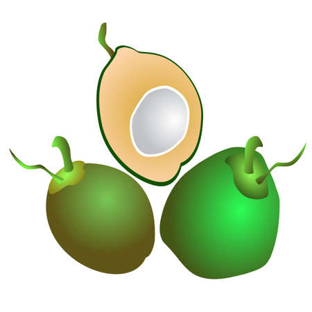 vector of fresh and soft young green coconut