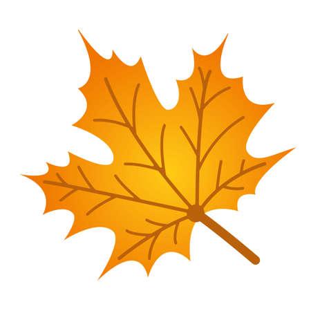 yellowed maple leaf vector
