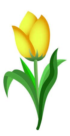 vector of yellow tulip that has been picked
