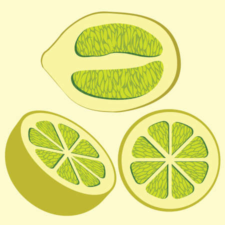 vector of four divided lemons viewed from various angles  イラスト・ベクター素材
