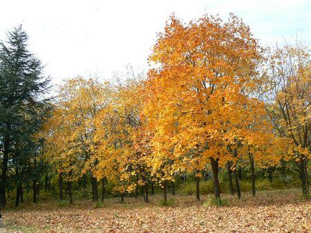 yellowautumn: Beautiful autumn mood in the Park Garden. A carpet of autumn leaves. Stock Photo