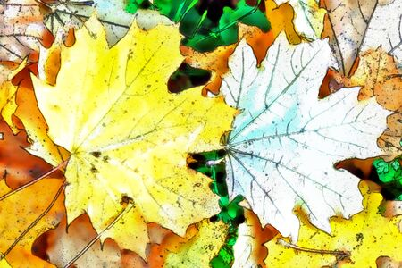 withering: Multi colored fallen autumn leaves background.