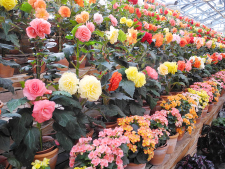 Colorful flower dome photo