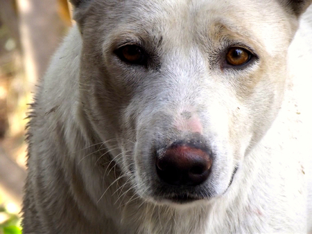 rueful: poor dog closeup and look at me Stock Photo