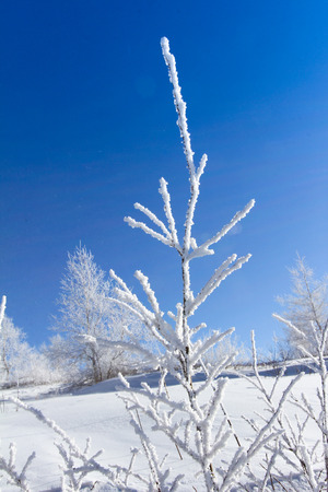 snow ground: Close up of branches on a snow ground