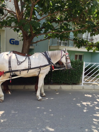 otganimalpets01: White horse  Stock Photo