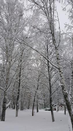 Winter forest in Siberia 写真素材