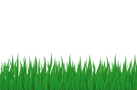 Green spring grass is isolated on a white background