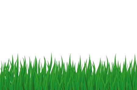 Vert de l'herbe de printemps est isol�e sur un fond blanc