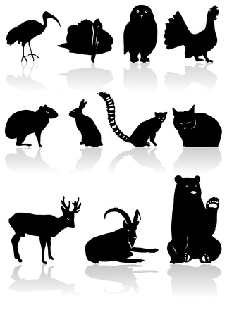 The set from black animal silhouettes with shadow Vector