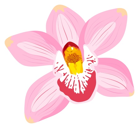 The orchid is isolated on a white background