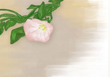 chalk still-life with two bindweed flower Imagens
