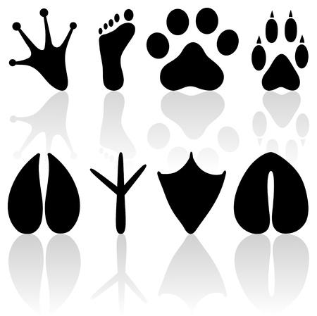 animal track: Footprint collection Illustration