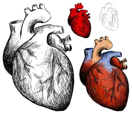 veine humaine: Vecteur de collecte r�aliste coeurs sur un fond blanc Illustration