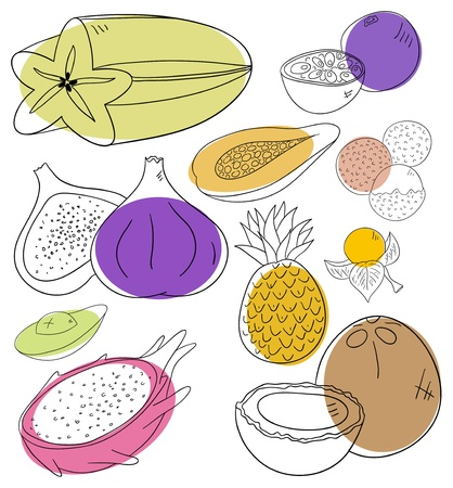 exotic fruits collection on a white background Vector