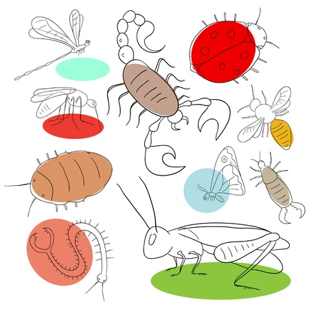 Insect collection are isolated on a white background Vector