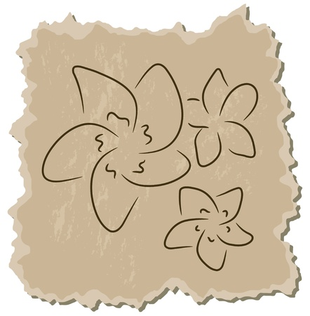 frangipani flower: Vector frangipani on a brown cardboard background