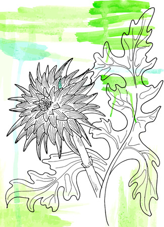 Vector chrysanthemum flower on the gleen watercolor smudges