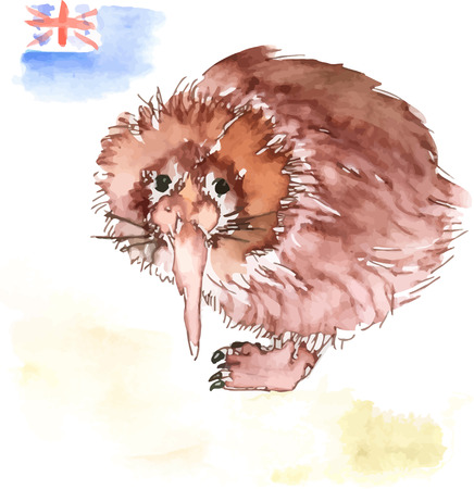 Vector watercolor brown Australian kiwi bird and flag
