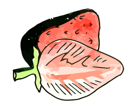 whie: Vector watercolor strawberries on a whie background
