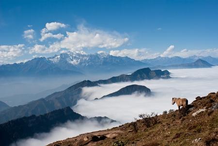 Western Sichuan, China, Cattle Mountain cloud falls Stock Photo - 12604801