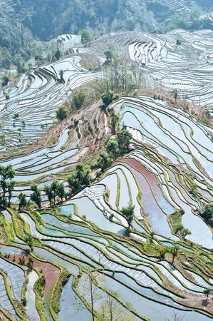 Chine Yunnan, la couleur Yuanyang terrasses