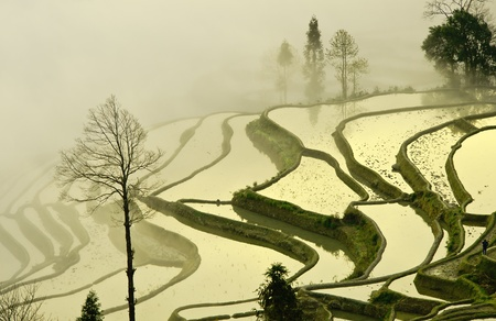 China Yunnan, Yuanyang terraced color photo