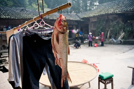 Sichuan Province, China 2 February: Sichuan rural yard, hanging up the fish, people preparing food for the Chinese New Year, Sichuan, China, February 2, 2011 Stock Photo - 12768780