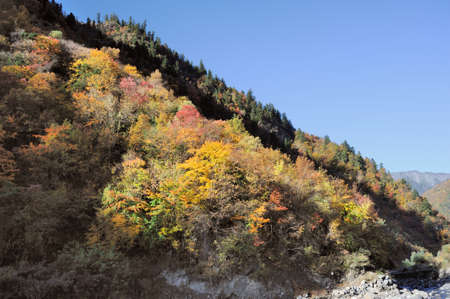 Sichuan, China, autumn leaves on the plateau  photo