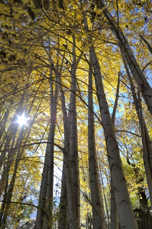 Western China, autumn trees xinduqiao photo