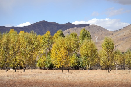 Western China, autumn trees xinduqiao Stock Photo - 12907744